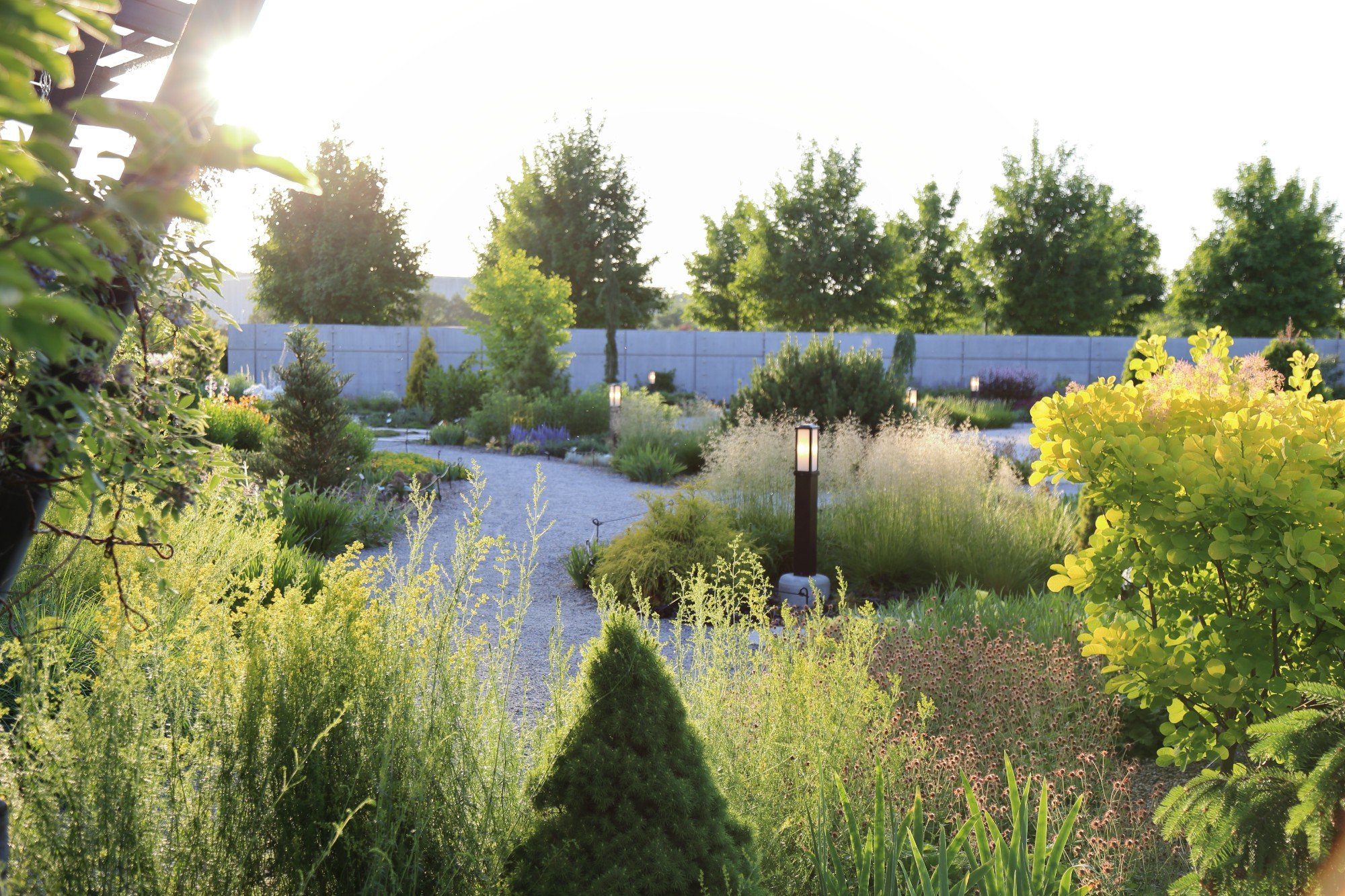 Light illuminates grasses and outlines trees in the Rutledge Conifer and Gravel Garden on June 2. Photo by Kelly Norris.