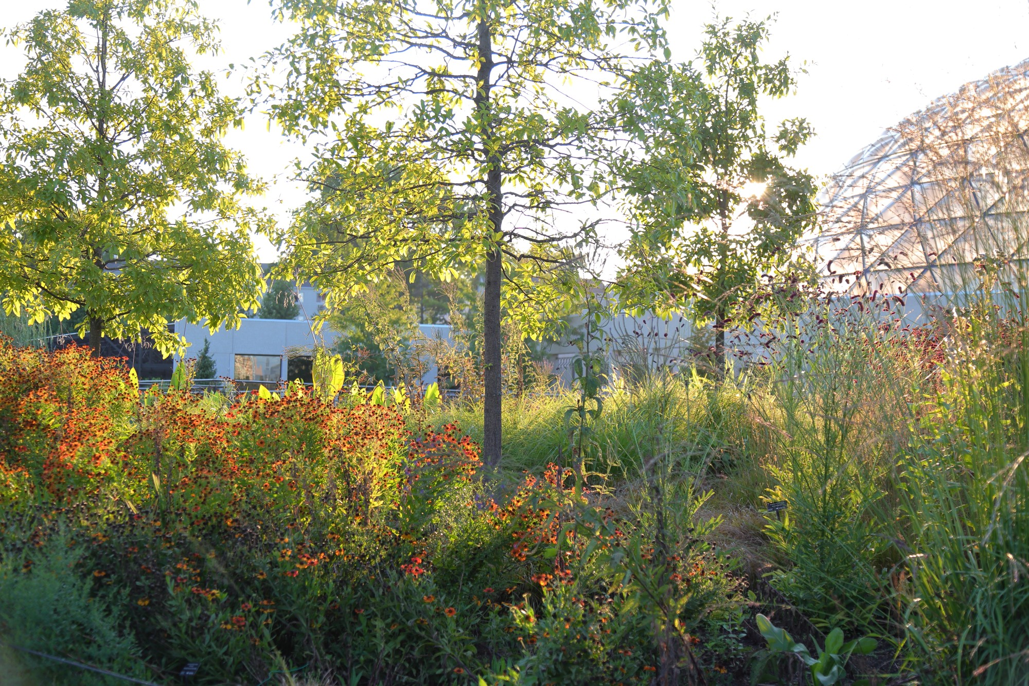 Morning light coming through the oaks in the Lauridsen Savanna, Sept. 2. Photo by Kelly Norris.