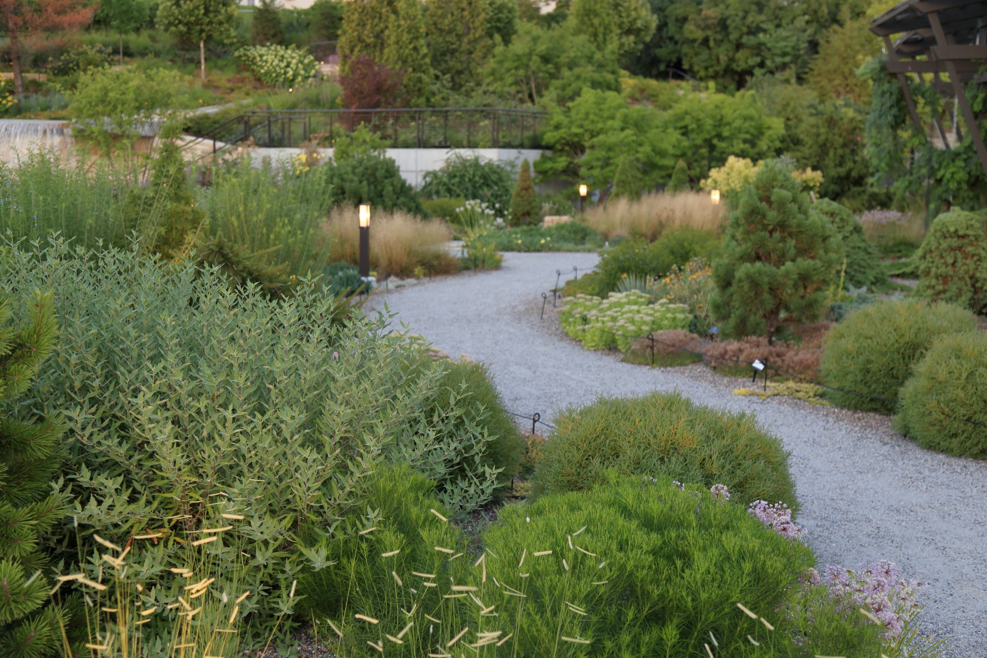 The Rutledge Conifer Garden, July 2016. Photo by Kelly Norris.
