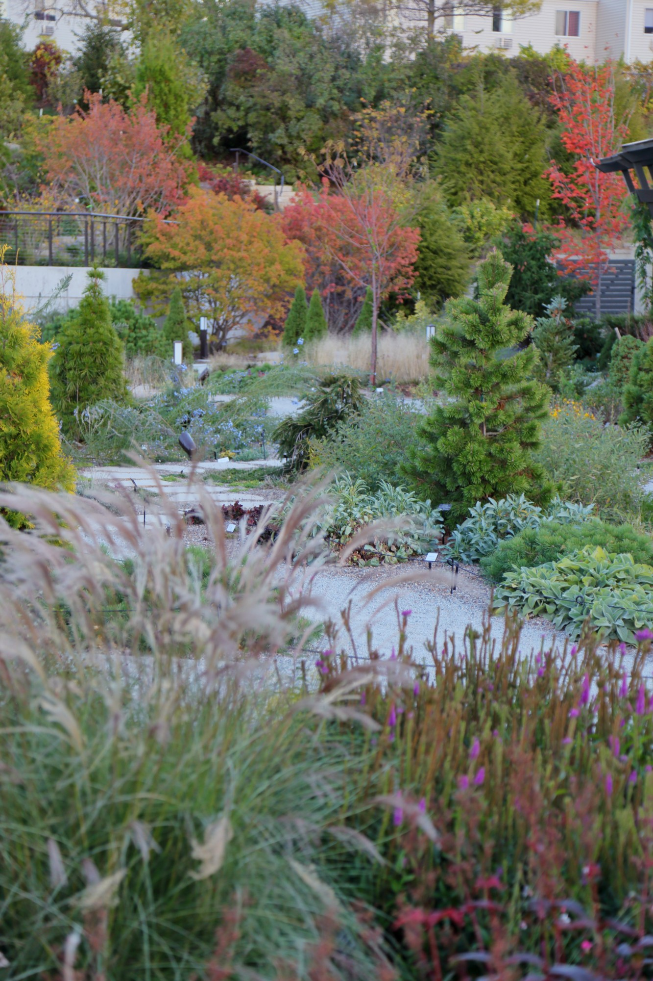 The Rutledge Conifer Garden, October 2015. Photo by Kelly Norris.