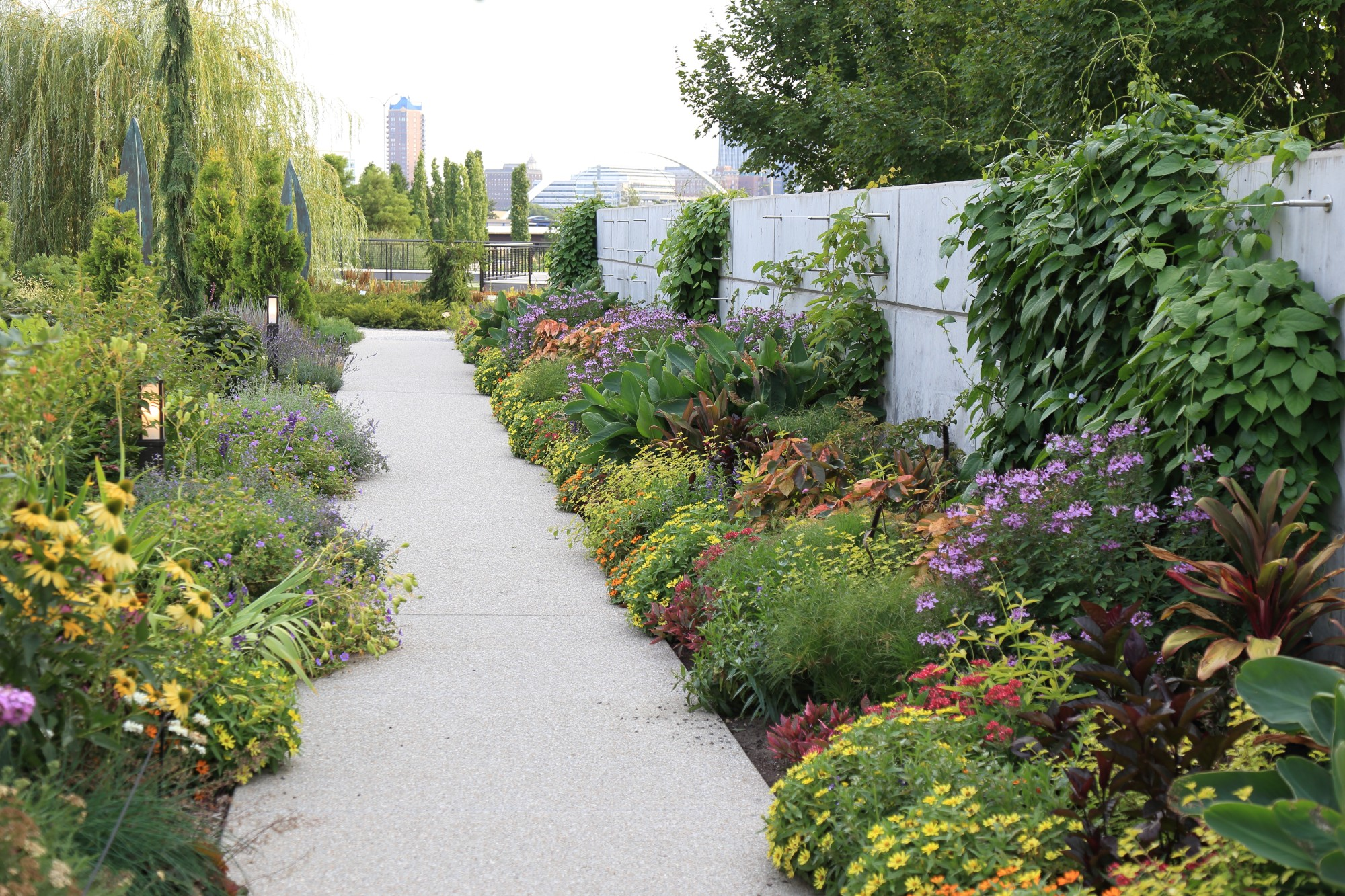 The espalier wall in the Koehn Garden on Aug. 2. Photo by Kelly Norris.
