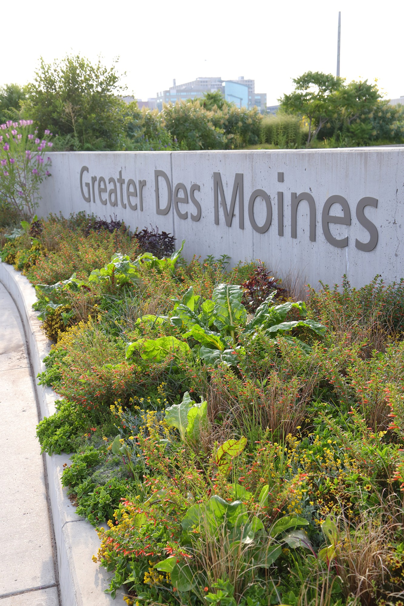 The meadow planting in the EMC Insurance Foundation Entry Garden on August 2. Photo by Kelly Norris.