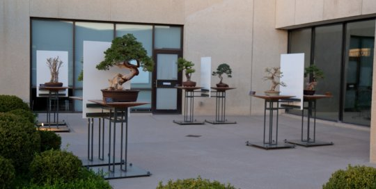 The Bonsai Gallery, April 2015. Photo by Kelly Norris.