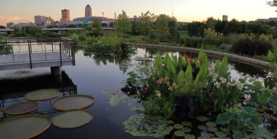 The water garden overlooking the Des Moines skyline on July 25. Photo by Kelly Norris.