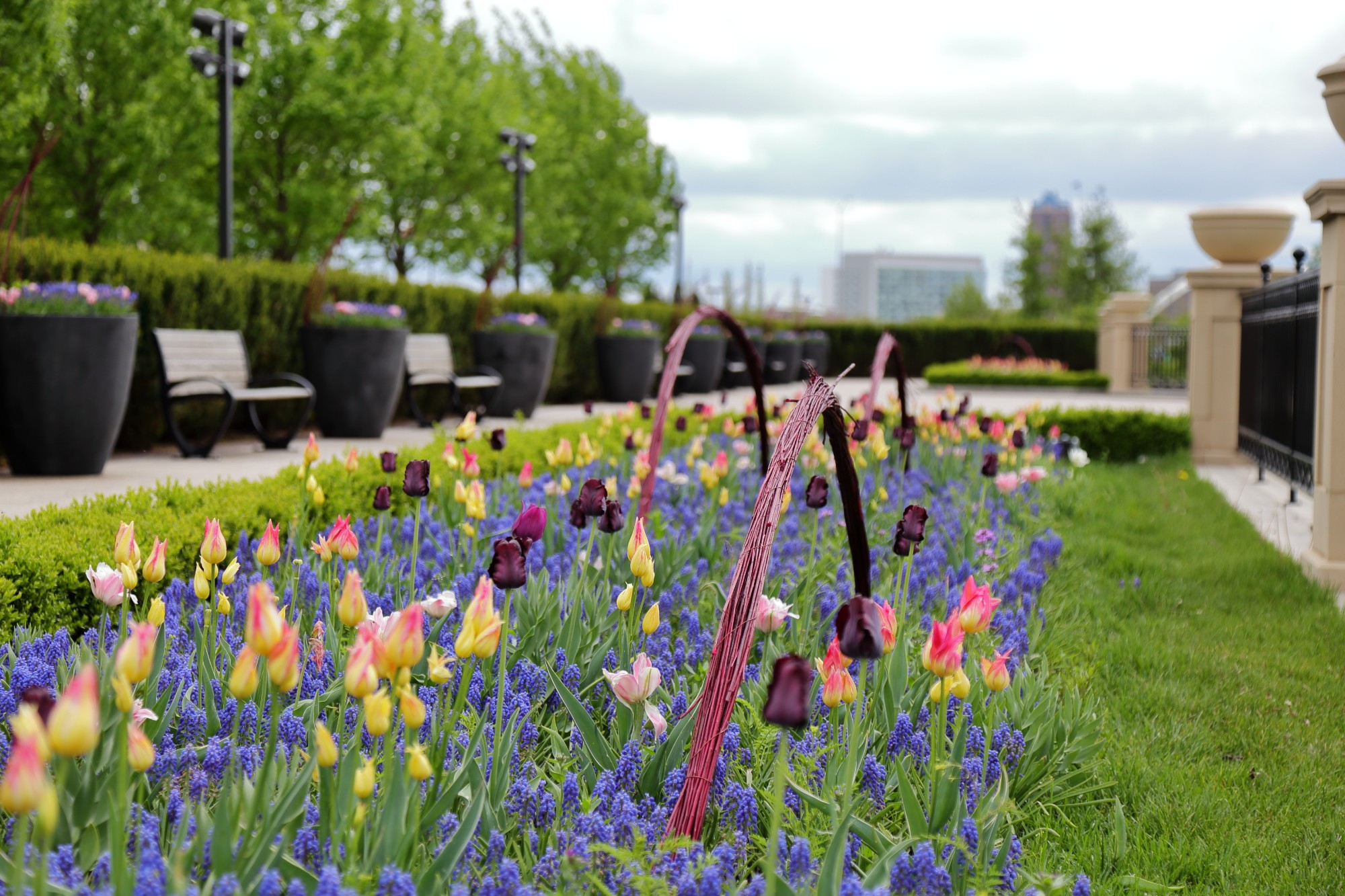 Tulips and grape hyacinths on the Principal Belvedere with hand-made twig sculptures. Photo by Kelly Norris.
