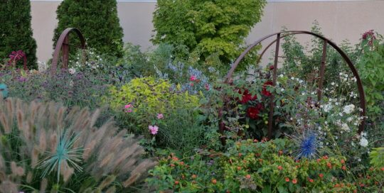 Late season colors glowing in the Wells Fargo Rose Garden on September 16. Photo by Kelly Norris