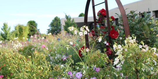 The Wells Fargo Rose Garden shines in the July sun. Photo by Leslie Hunter.