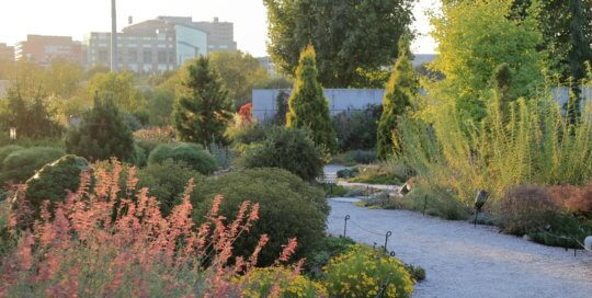 The Rutledge Conifer Garden on September 16. Photo by Kelly Norris.