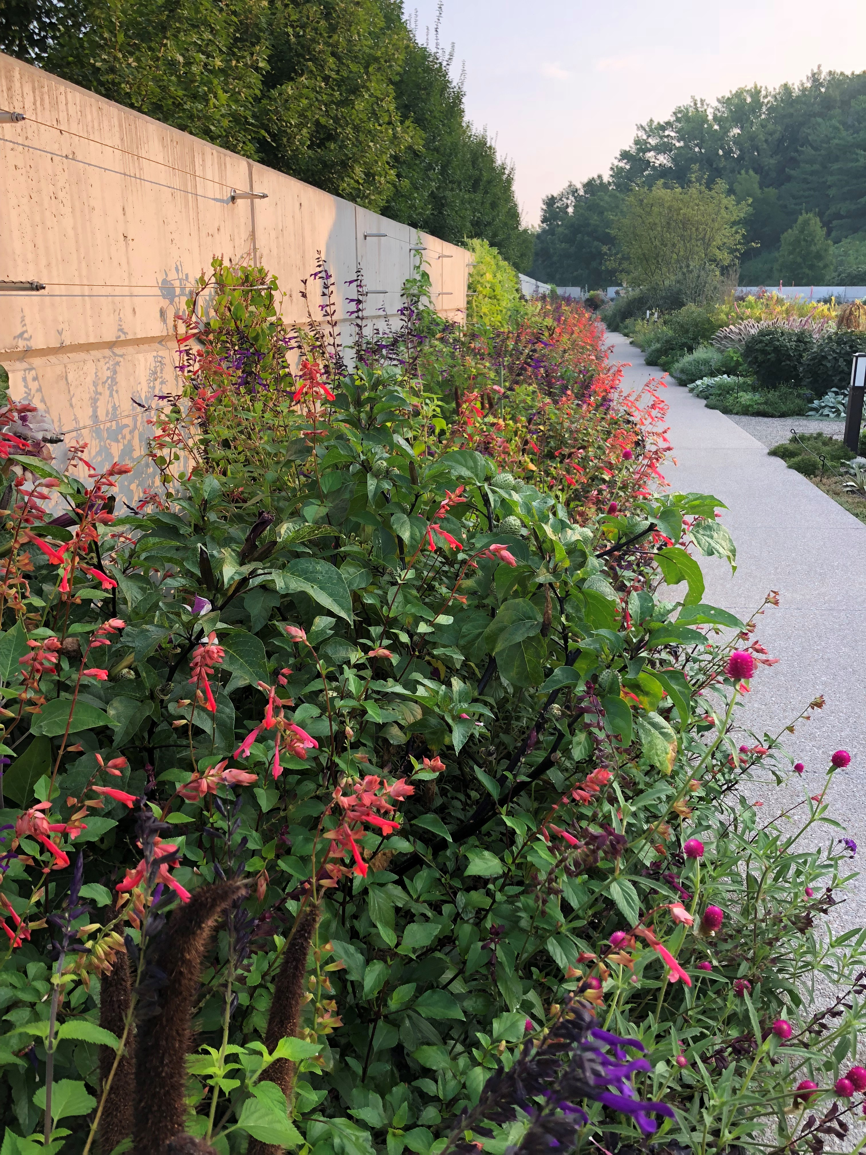 The espalier wall annual planting in August. Photo by Leslie Hunter, Aug. 25.