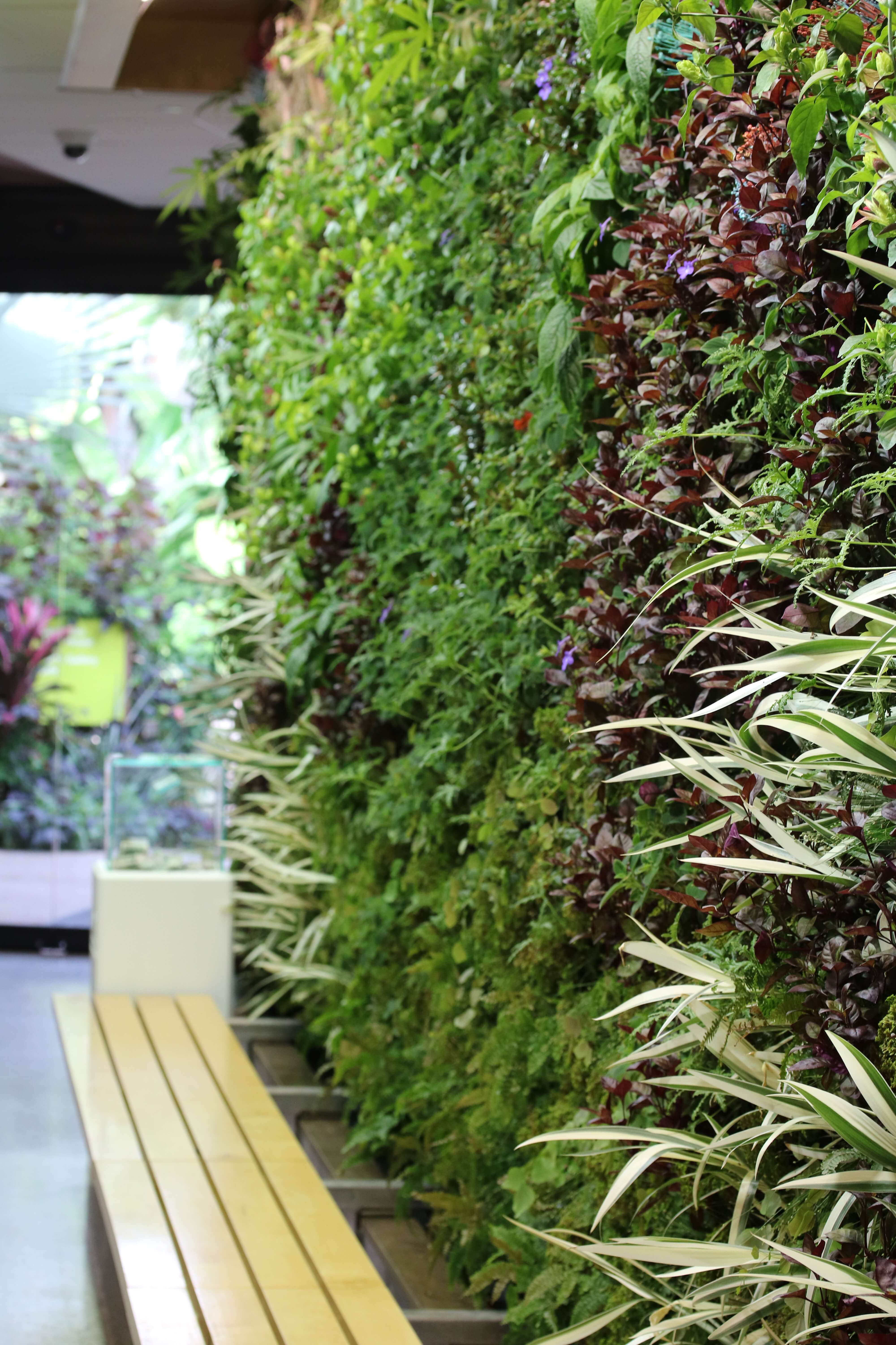 The Living Wall plants were all changed out on Oct. 2 with a fresh new design. Photo by Hannah Loy.