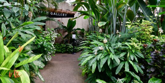 Take a walk through the tropical fronds to the North Gallery and find nature photography on display.