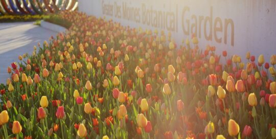 Sign wall tulips in the EMC Insurance Companies Entry Garden. Photo by Kelly Norris, April 20 (2)