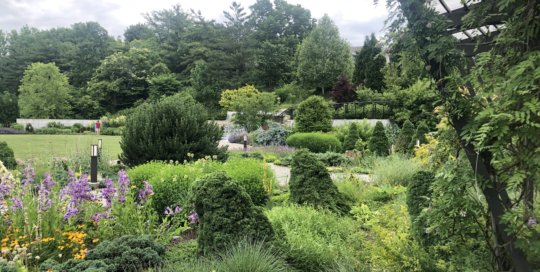 A vibrant view overlooking the Rutledge Conifer Garden toward the hillside garden.