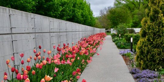 Pink, red and orange tulips line the Espalier Wall in early May, during Spring Garden Festival.
