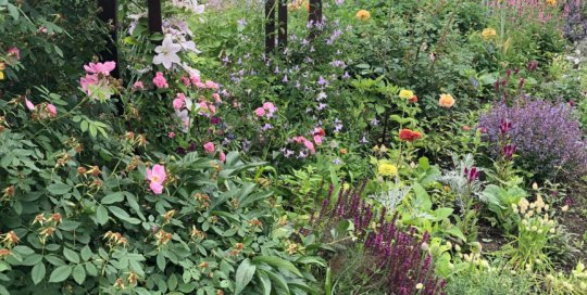 A colorful vignette in the Wells Fargo Rose Garden is complete with Zinnia, Clematis, Salvia, Apple Jack Buck roses and more.