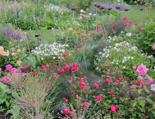 Roses: Garden Design and Pruning