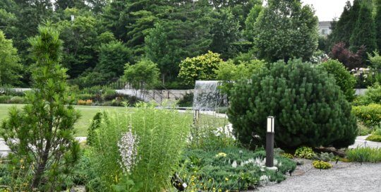 Lush greens on the hillside garden created a stunning backdrop for the Rutledge Conifer Garden this July.