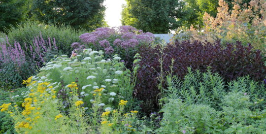 A glimpse of the billowing borders in the Koehn Garden on Aug. 4.