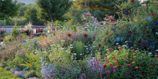 Candy colors and textures exude from the crisp bed lines of the Wells Fargo Rose Garden on Aug. 4.