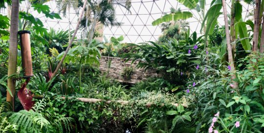 A panoramic shot displaying the lush green conservatory landscape.