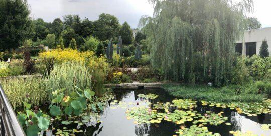 A gray-skies vignette of the water garden facing the Rutledge Conifer Garden.