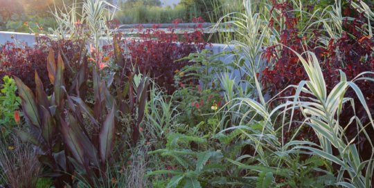 Summer lush plantings glow in evening light in the EMC Insurance Companies Entry Garden.