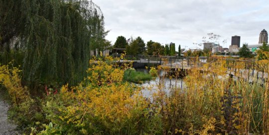 A view of the water garden and Des Moines skyline framed by autumn's golden tones.