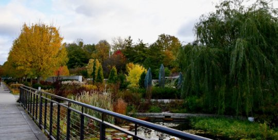 A stunning view of the fall colors in the Rutledge Conifer Garden from the boardwalk.