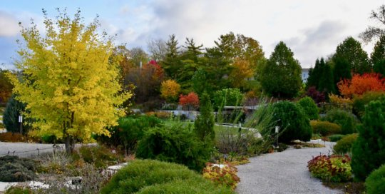Vibrant greens and pops of yellow and orange brought the Rutledge Conifer Garden and hillside garden to life in late October.