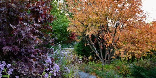 Trees with changing leaves line the hillside garden path.