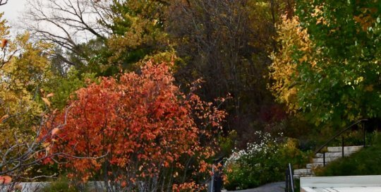 Another view of the Garden's fall foliage across the waterfall.