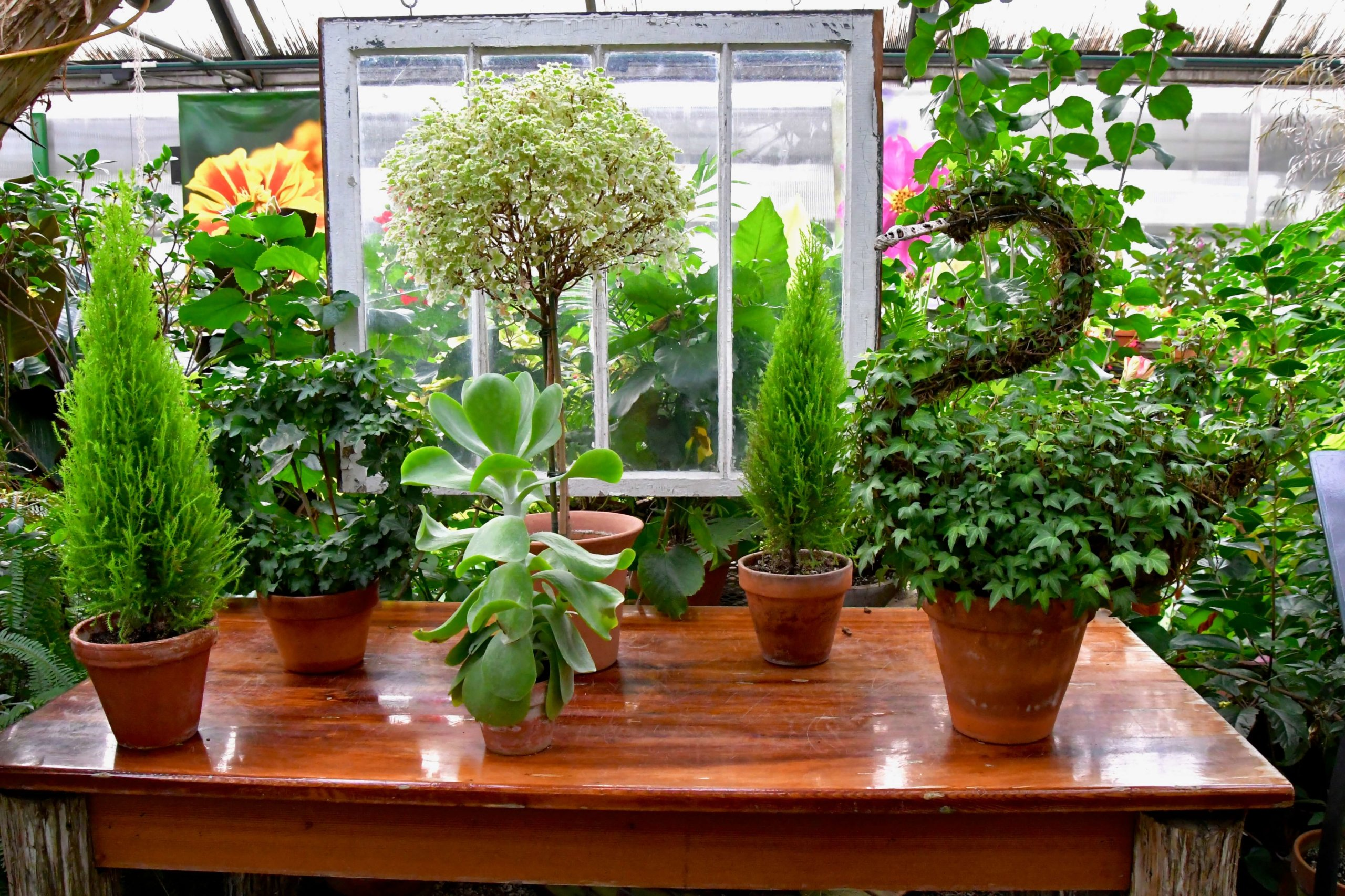 A creative topiary display in the Gardeners Show House.