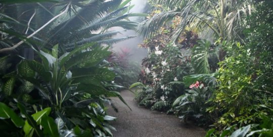A misty walk through the winding conservatory paths.