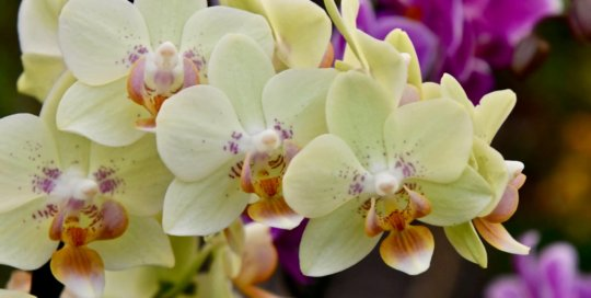 A closer look at the orchid display surrounding the holiday train in the Gardeners Show House.