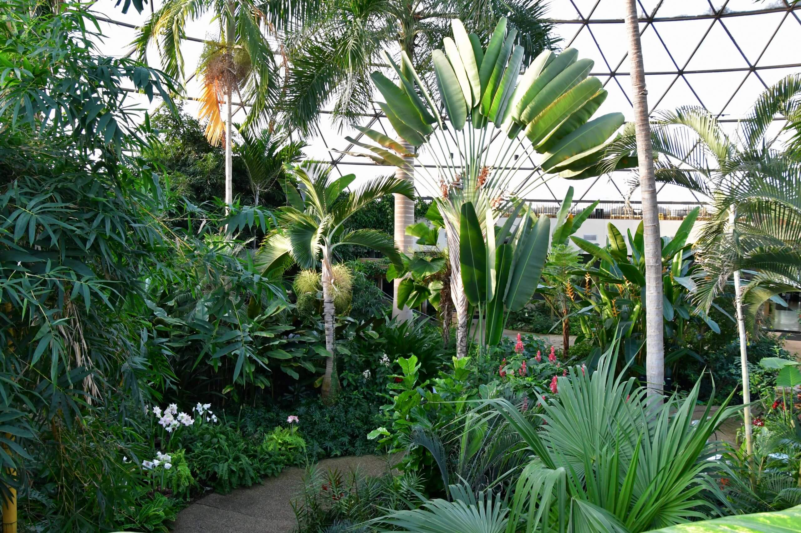 The conservatory boasts countless shades of green as snow covers the rest of Des Moines.
