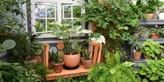 Discover leaves of all shapes and sizes inside the Gardeners Show House.