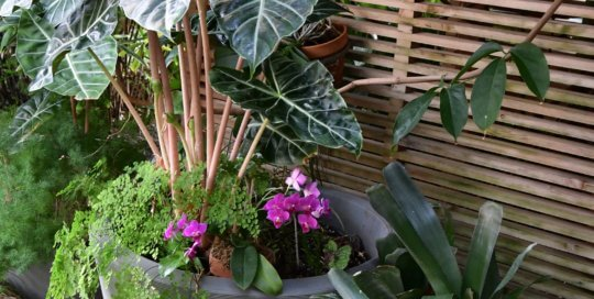 Two striking container plants greet visitors on their way into the conservatory from the Garden Commons.