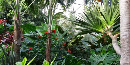 Eye-catching, colorful flowers and foliage bask in the conservatory sunlight.