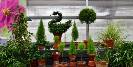 Look for creative topiary and other unique plants inside the Gardeners Show House.