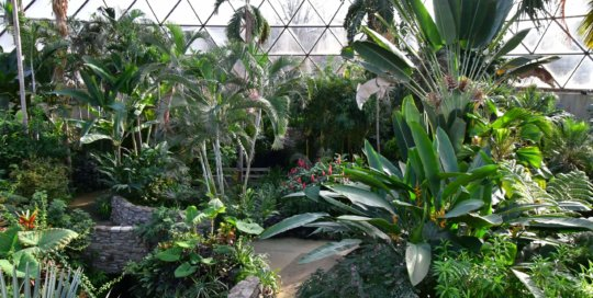 The conservatory collection glows in the sunlight on a cold winter day in Iowa.