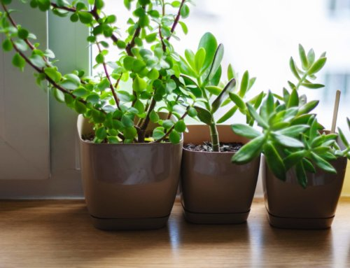5 Tips for Healthier Houseplants