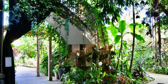 The conservatory view from the Garden Commons shows multiple Jade Vine blooms under the stairwell.