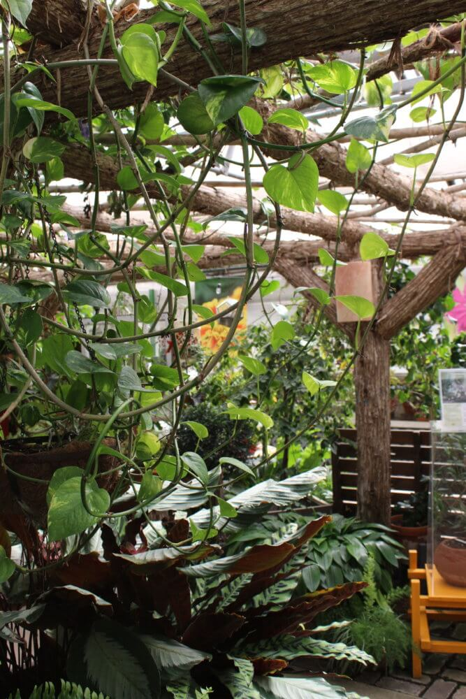 Lush green vines cascade from the timbers in the Gardeners Show House.