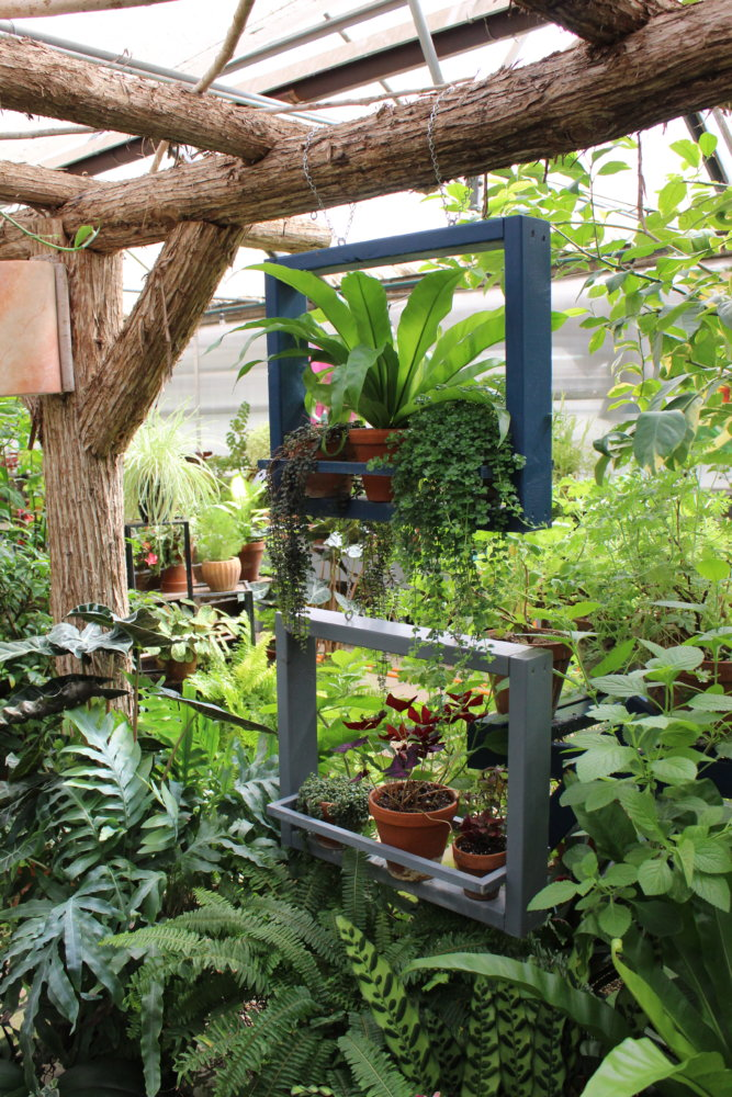 Another hanging displays showing off vibrant greens and trailing vines.