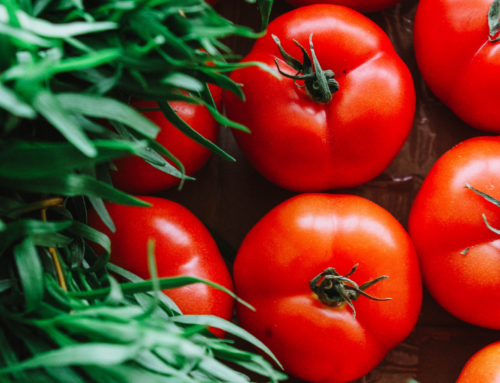 Tips for Growing Healthier Tomatoes