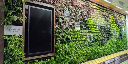The Prairie Meadows Living Wall is growing into its new display for 2020. This wall contains more than 1,300 individual plants!