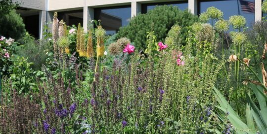 Layered plantings continue to come to life in the Wells Fargo Rose Garden this month.