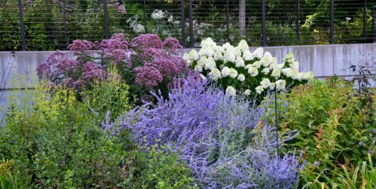 Layered, colorful plantings come into focus this month in the Koehn Garden.
