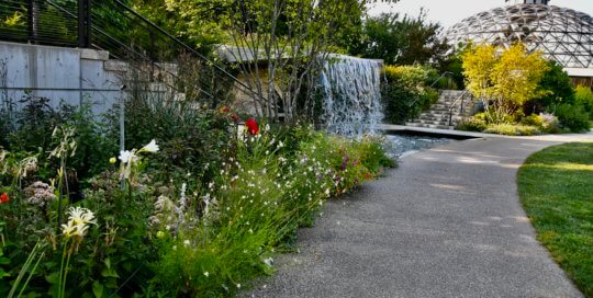 Soft morning light makes for a sunning and welcoming view of the Koehn Garden's waterfall.