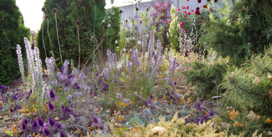 An artful, wild planting in the Rutledge Conifer Garden. Photo by Kelly Norris.